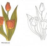 Раскраски цветов с исходными фотографиями