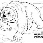 Раскраска дикие животные