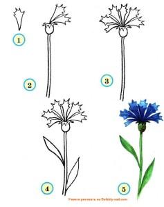 Учимся рисовать цветы васильки
