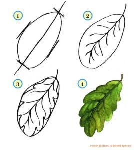 Как нарисовать листок. Дубовый лист.