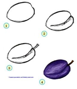 Как нарисовать сливу