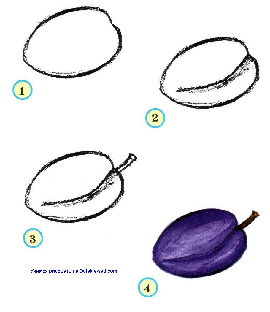 Как нарисовать сливу карандашом поэтапно