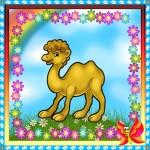 Карточка верблюд