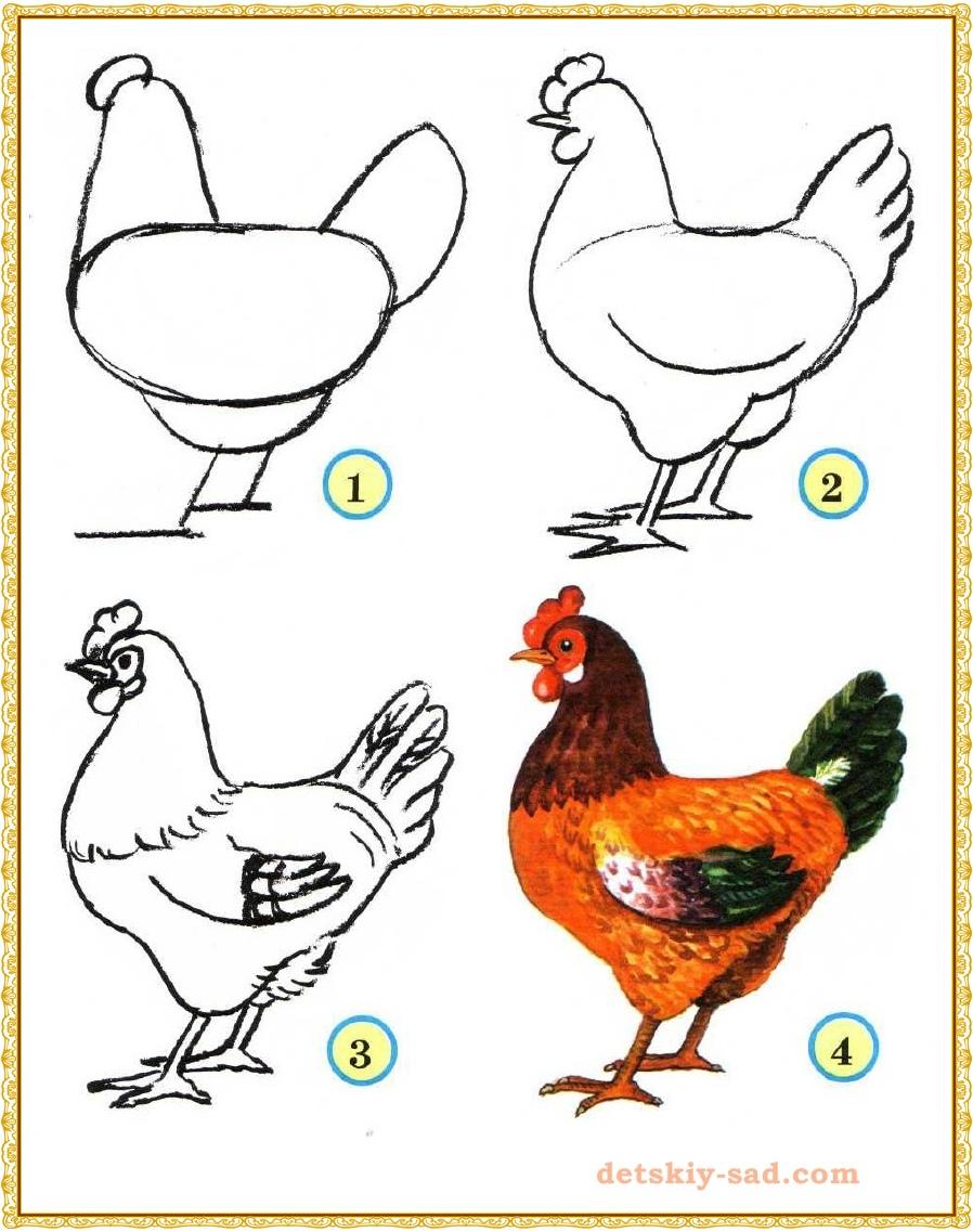 Как нарисовать карандашом куриц