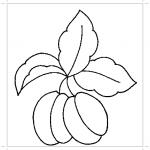 Абрикос на веточке раскраска