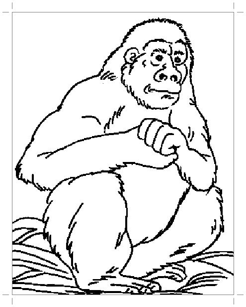 большая горилла раскраска все для детского сада