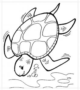 Раскраска черепаха - Все для детского сада - Женский сайт ...