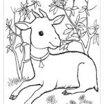 Раскраска год козы