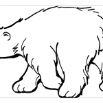 Белый медведь раскраска