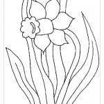 Единичный цветок нарцисса раскраска