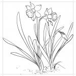 Нарциссы растут в земле раскраска