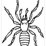 Раскраска паук - Все для детского сада - Женский сайт о ...