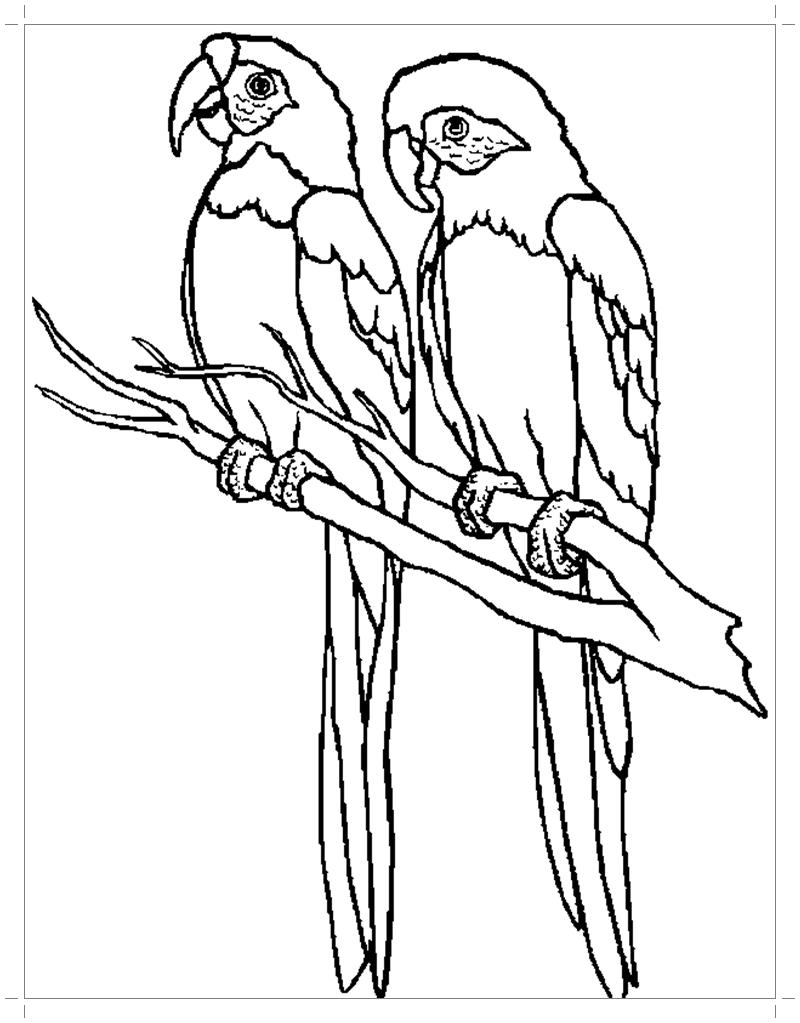 Попугай ара раскраска для детей