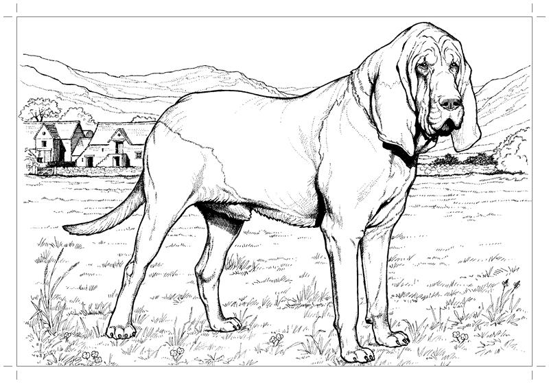 Собака картинка для детей рскраска - Все для детского сада