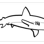 Раскраска акула - Все для детского сада - Женский сайт о ...