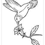 Колибри пьет нектар раскраска