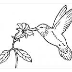 Раскраска колибри для детей