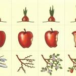 Карточки с яблоком, луком и веточкой для детского сада