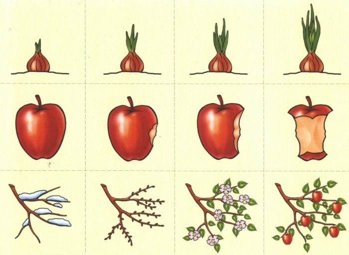 Развивающее занятие с луком, яблоком и веточкой