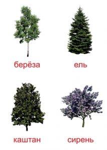 Названия деревьев для детей