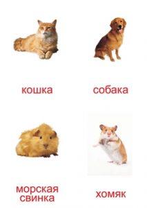 Картинка для изучения домашних животных