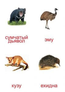 Карточка для изучения животных Австралии