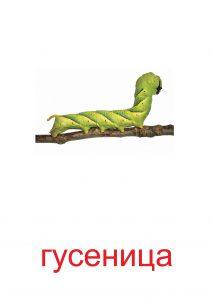 Гусеница