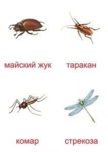 Карточка для изучения насекомых