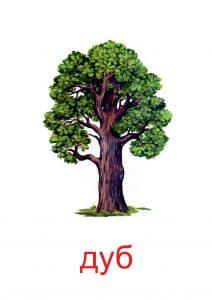 Деревья: картинки, сказки и развивающие задания для детей