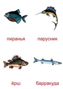 Карточка с рыбами для изучения