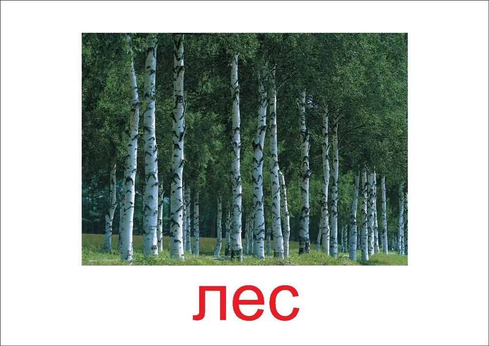 Лес - картинка для детей