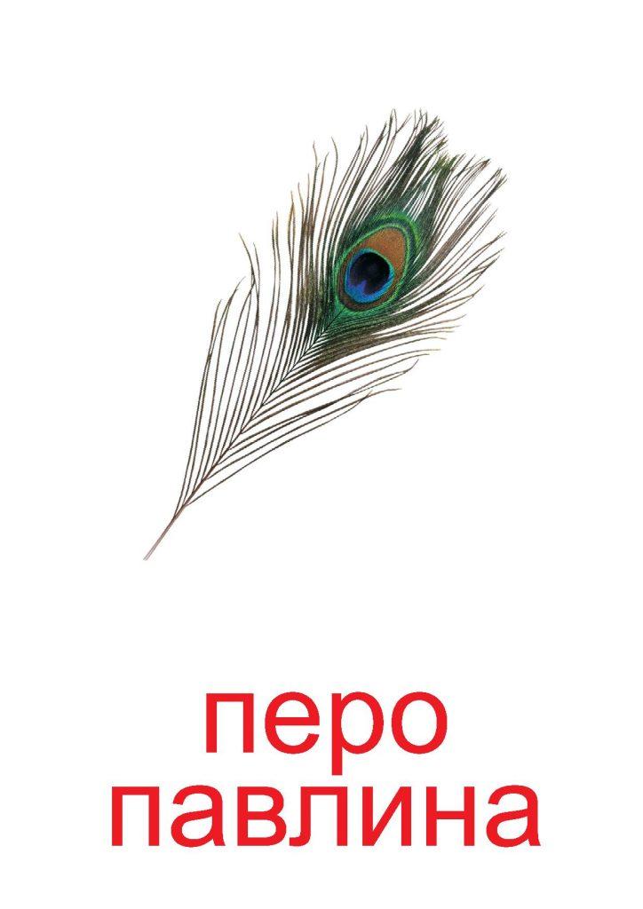 Перо как элемент природы