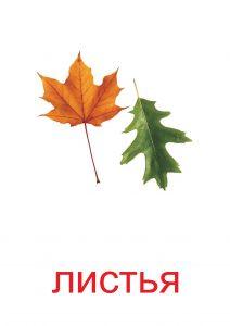 Листья как элемент природы