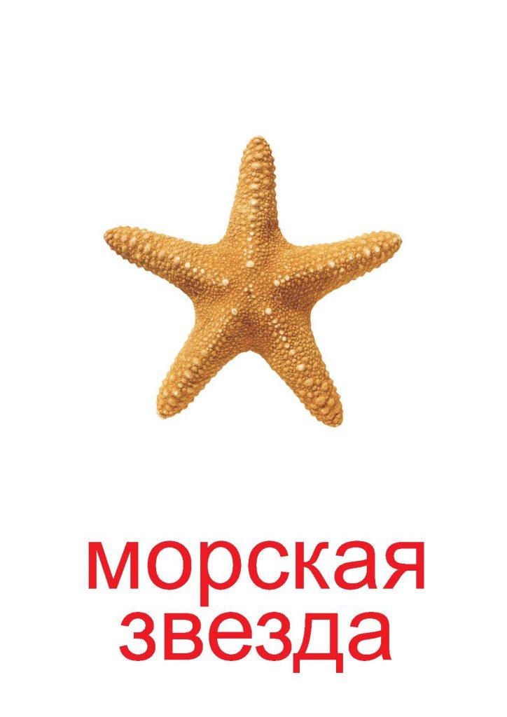 Морская звезда как элемент природы