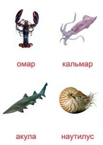Карточка для изучения морских обитателей