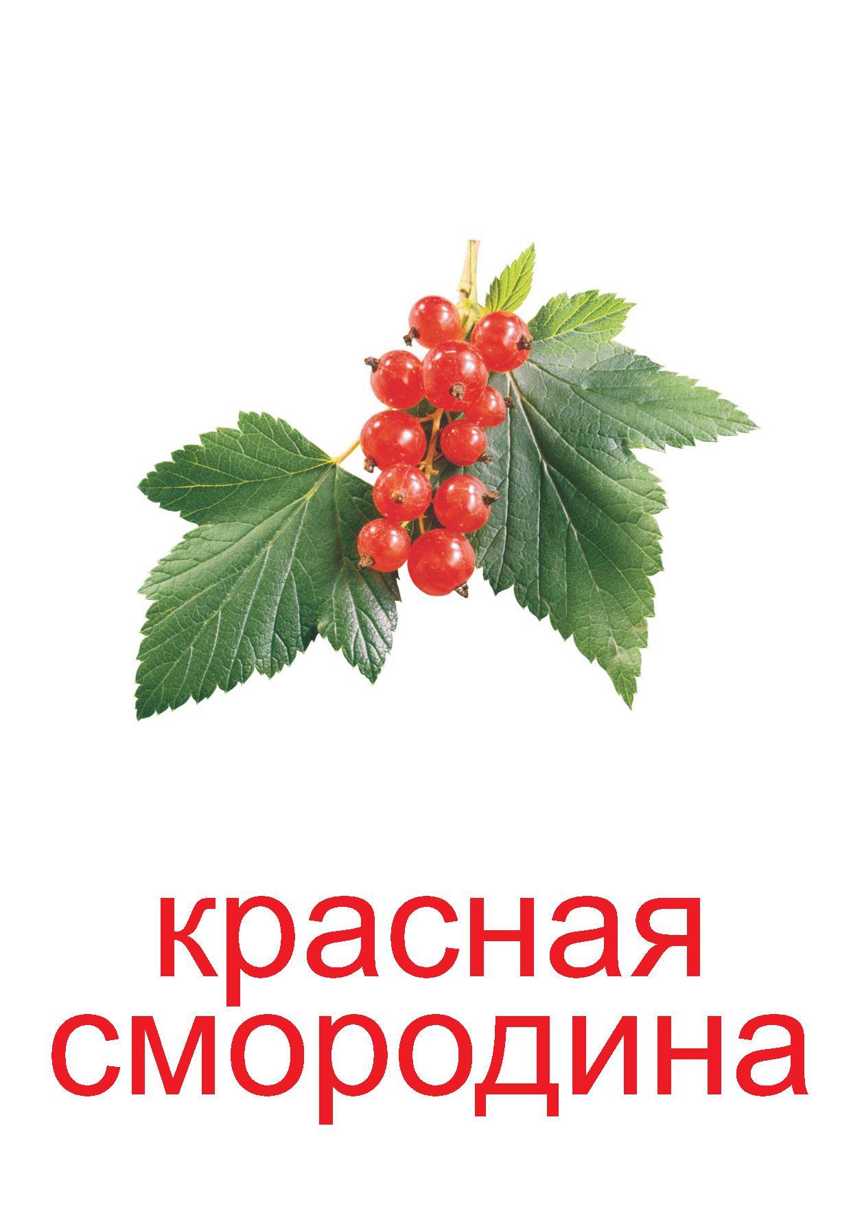 Красная смородина открытки