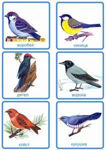 Карточки: воробей, синица, дятел, ворона, клест, кукушка