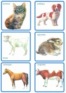 Карточки: кошка, собака, коза, кролик, лошадь, корова