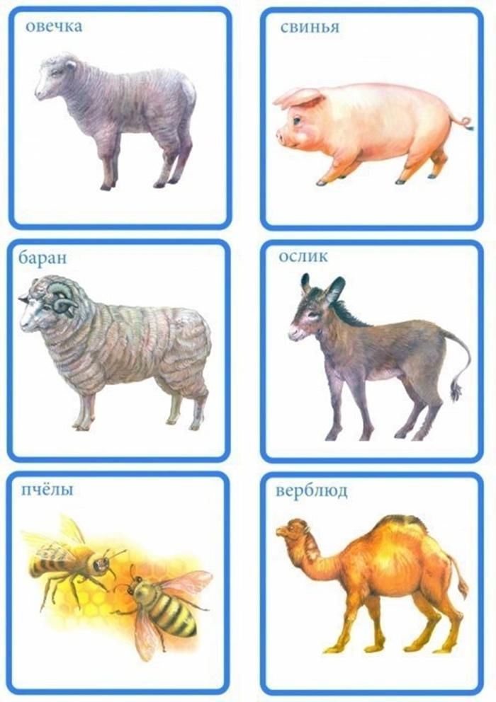 Карточки: овечка, свинья, баран, ослик, пчелы, верблюд