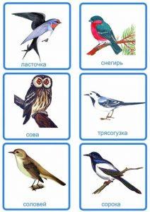 Карточки: ласточка, снегирь, сова, трясогузка, соловей, сорока