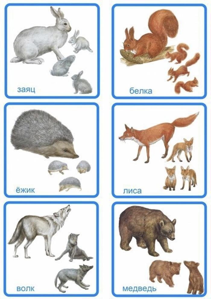 Карточки: заяц, белка, еж, лиса, волк, медведь