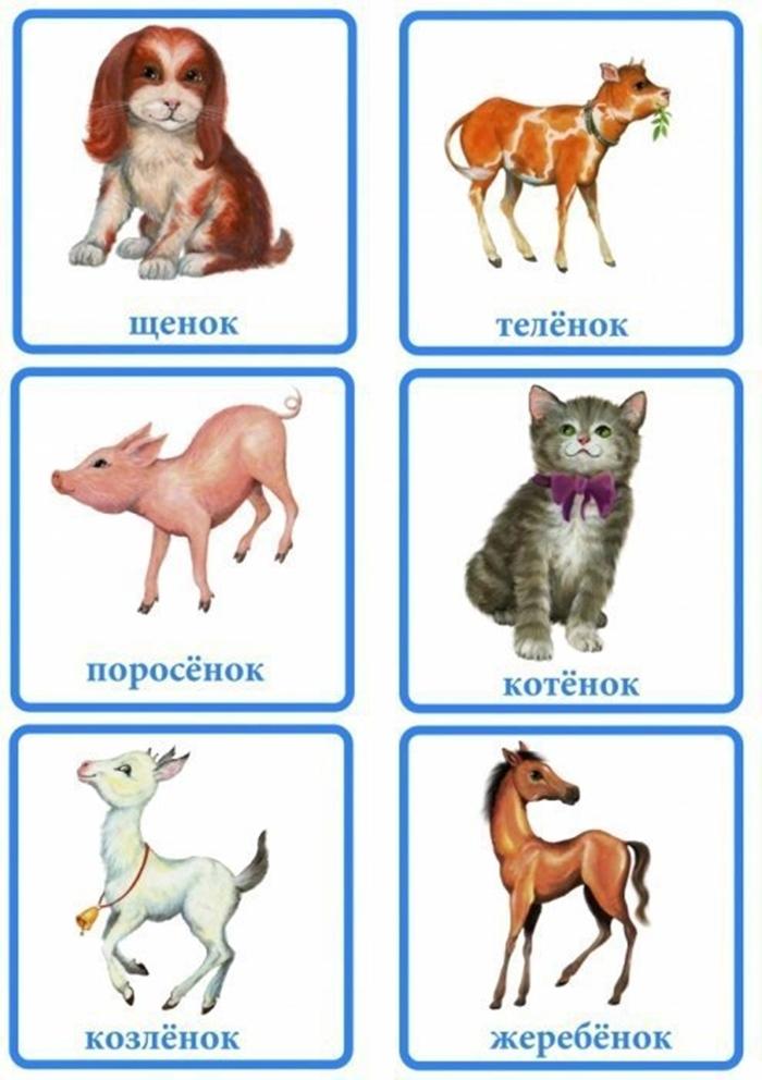 Карточки: щенок, теленок, поросенок, котенок, козленок, жеребенок