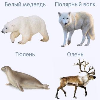 Северные животные для детей — демонстрационный материал