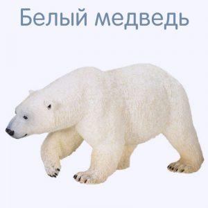 Белый медведь карточка