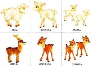 Детеныши оленя и овцы