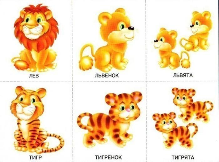 Детеныши льва и тигра