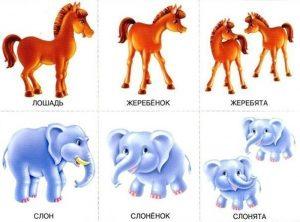 Детеныша лошади и слона
