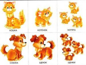 Детеныши собаки и кошки