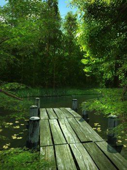Лесной фон у пруда