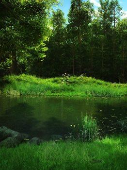 Лесной фон с деревьями, прудом и травой